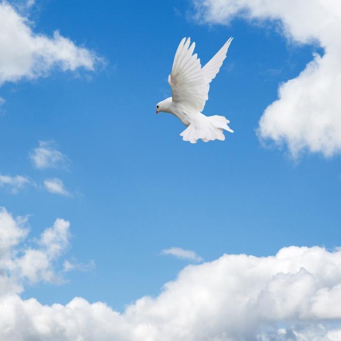 dove-flying-in-sky