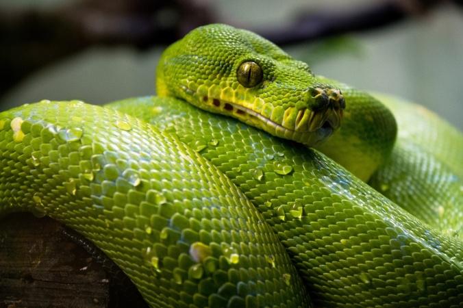 snake-1493641014t6y.jpg